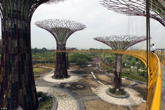 Stunning Super Forest In Singapore
