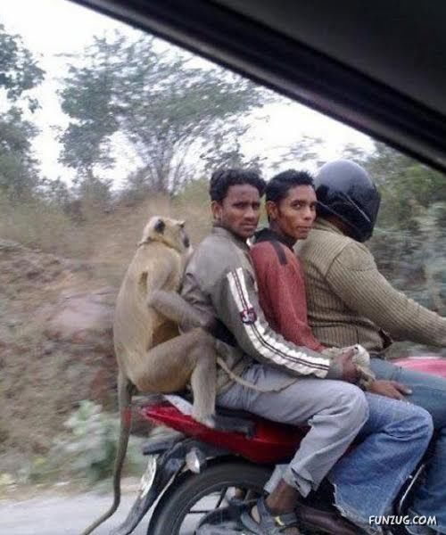 19 Pictures Of Things That Happen Only In India