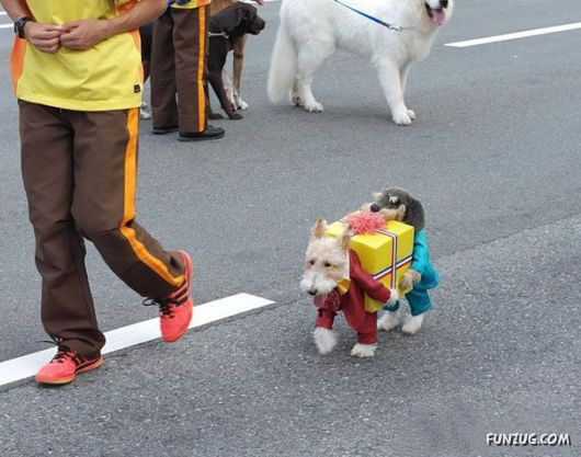 Funny Halloween Costumes For Pets
