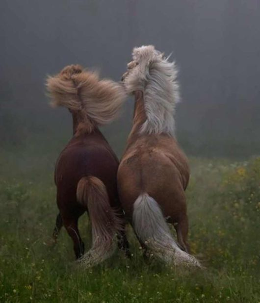 The Two Horses