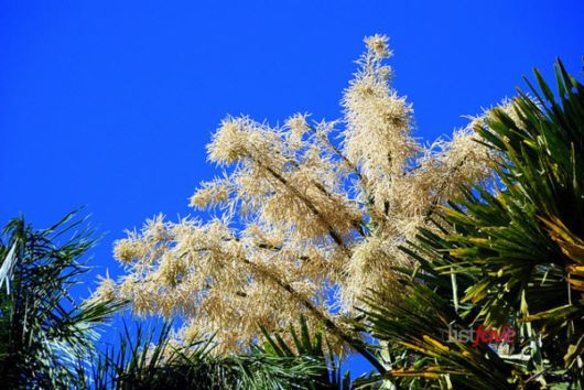 The Top Ten Smelliest Plants
