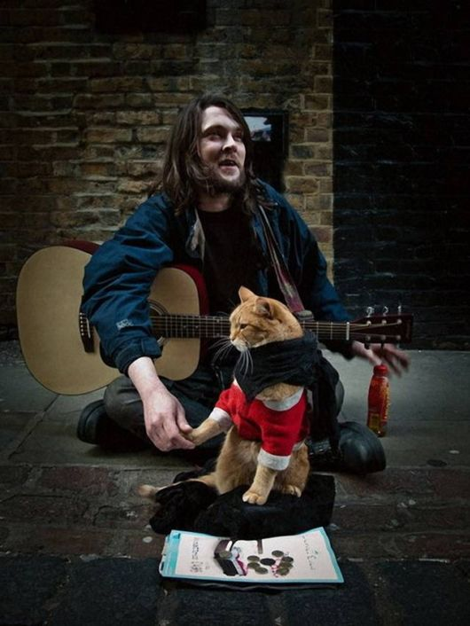 Red Cat Bob And James Bowen (Story)