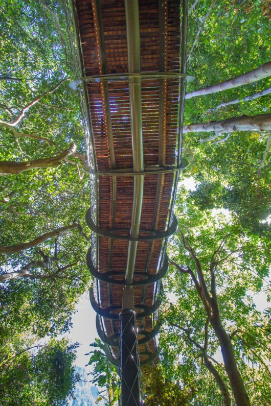 The Canopy Walkway In South Africa