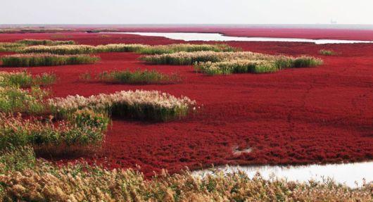 Incredible Red Beach In Panjin, China
