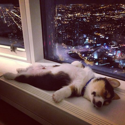Cute Tired Animals That Sleep Wherever They Please