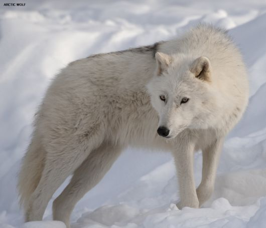 Beautiful Pictures Of Wild Animals